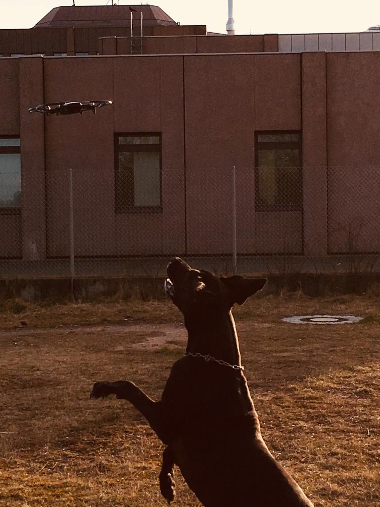 Alvin und die Drohne